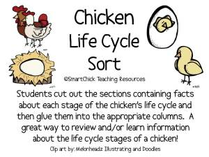 chickenlifecyclesort