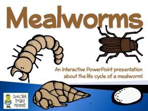 MealwormsPowerpoint1